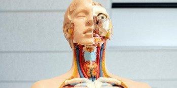 La maca, une racine qui prend soin de la thyroïde